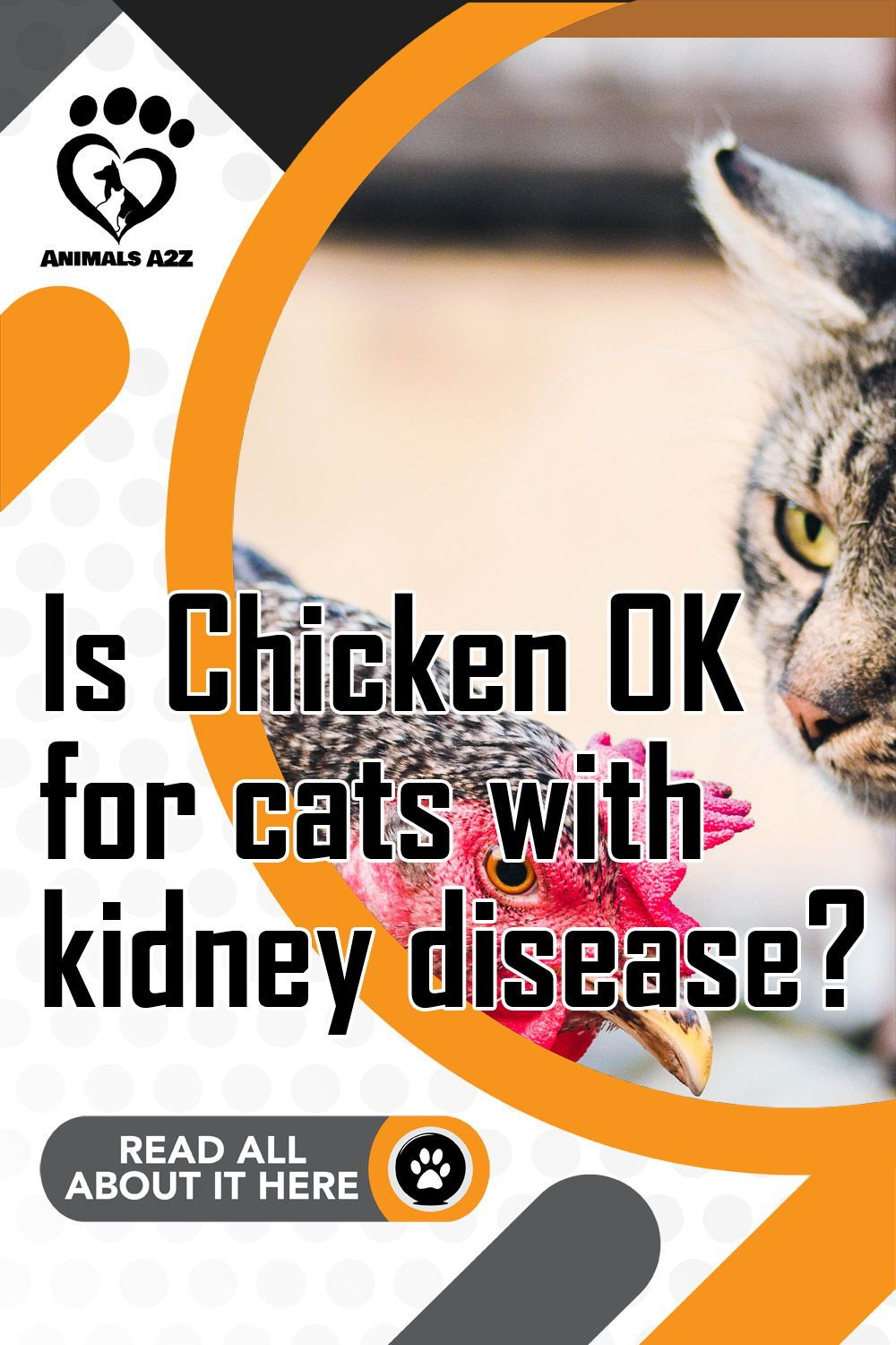 Is Chicken OK for cats with kidney disease? in 2020