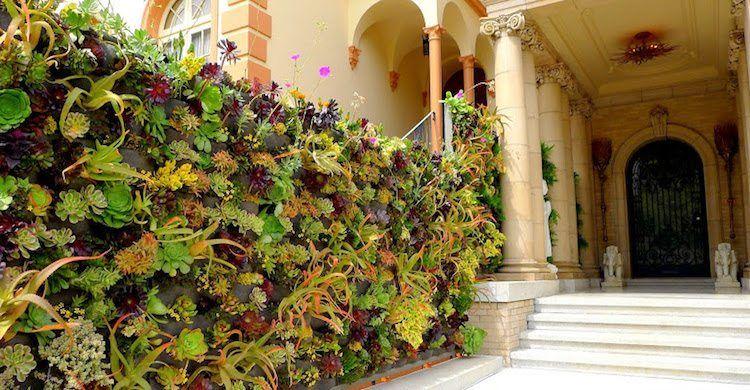 Construire mur végétal extérieur u2013 conseils sur les types et leur