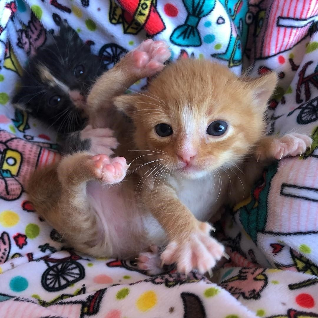 Source Instagram Com Amazing Cats Worldwide Bottlebabyfosters When Youre 60 Grams Heavier Than Your Sister But S Cat Care Cat Animal Pictures Kitten Pictures