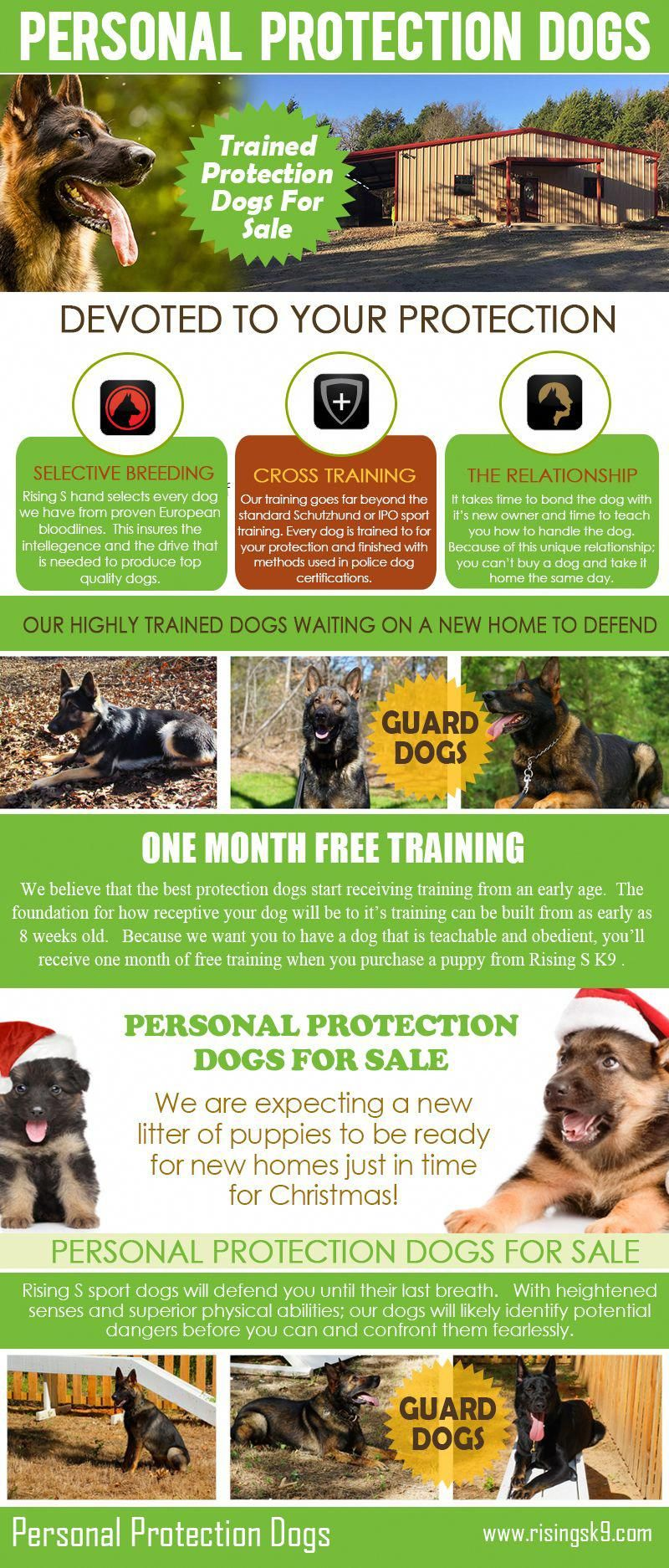 Dog Training For Agility Get All Of Your Dog Questions Answered