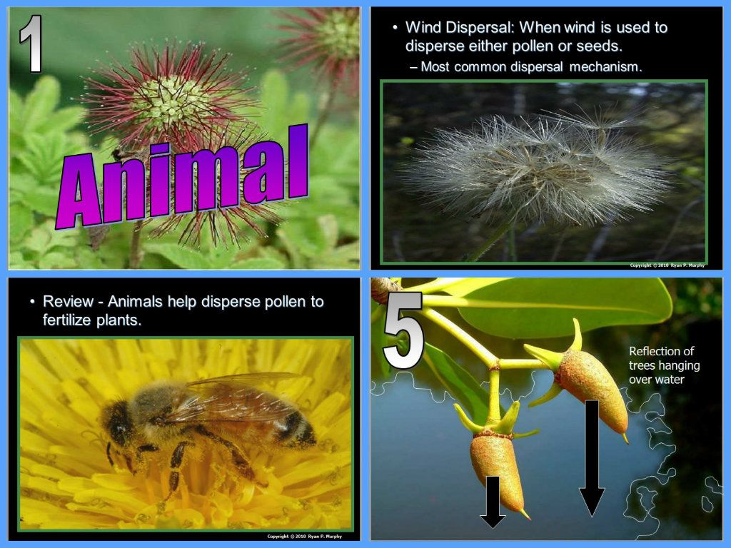 Plants Seed Dispersal Lesson With Images