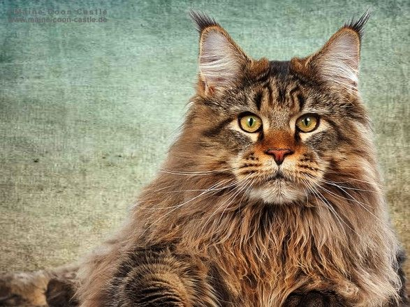 Pin Auf Cats And Kittens Funny Cute Or Random Posts