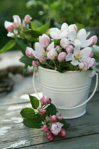 ♡♡♡ - fiori - boccioli