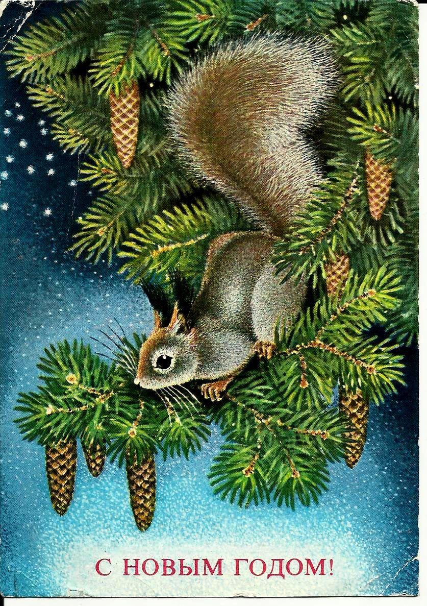 squirrel vintage russian postcard happynew year. Black Bedroom Furniture Sets. Home Design Ideas
