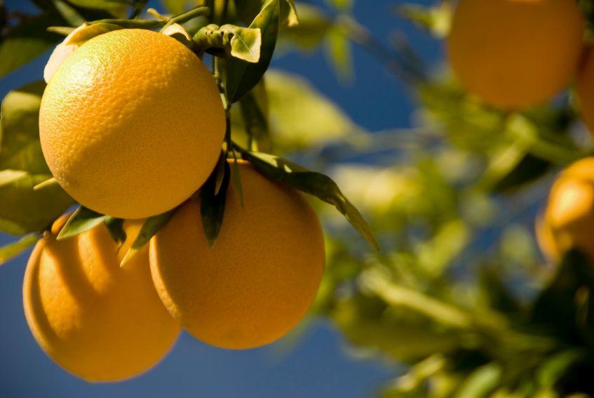 Orangen - Navelorgangen (1-12)
