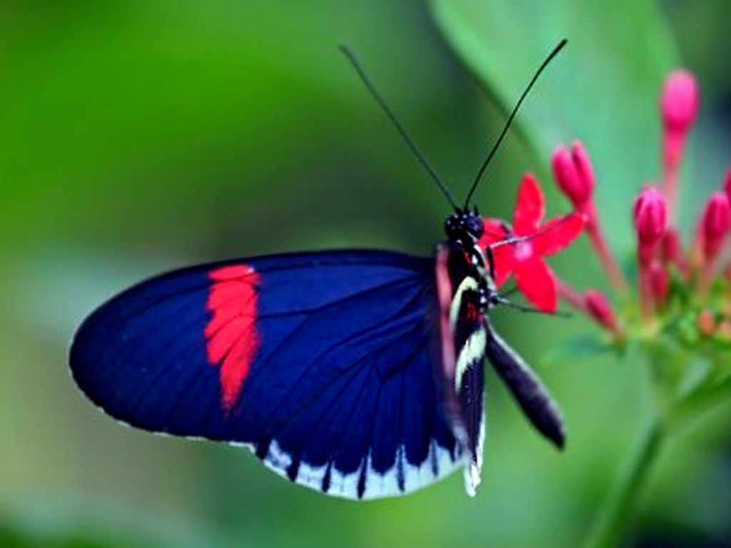 Butterfly Backgrounds | Wallpapers Collection: Butterfly ...