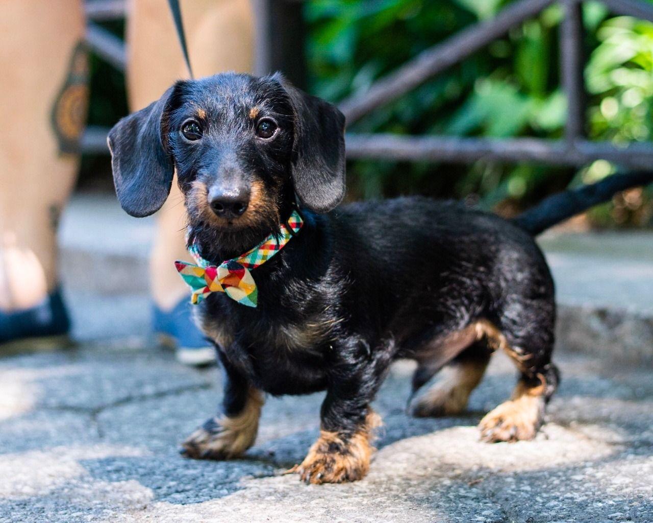 The Dogist Photo Dachshund Dog Love Cute Animals