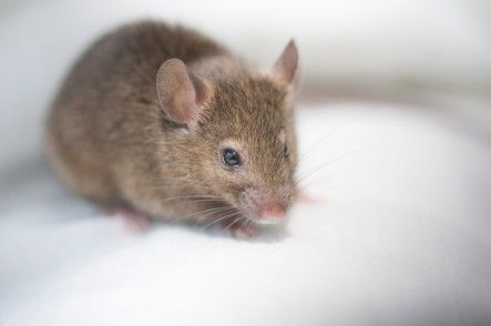 5 Humane Ways To Get Rid Of Mice Care2 Healthy Living Getting