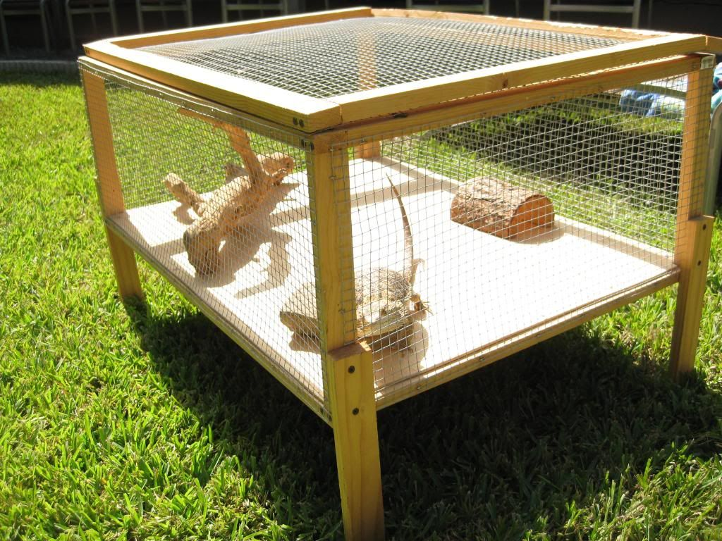 outdoor cage fro bearded dragon. Might make a small one for outside for when I get my dragon. With a few 2x4's and chicken wire it should be good