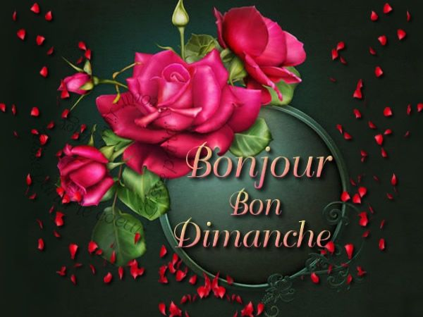 Bonjour Bon Dimanche Dimanche Fleurs Roses Bon Dimanche