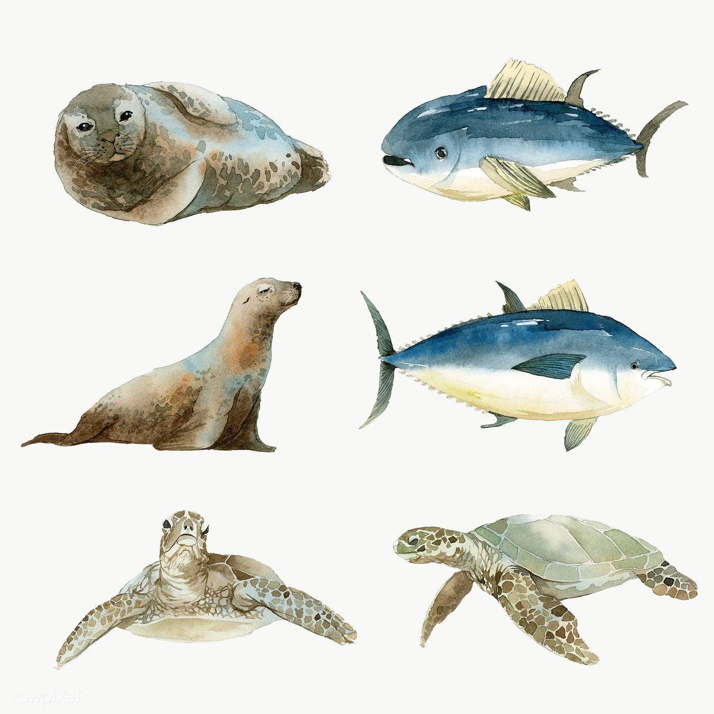 Marine Life Set Painted In Watercolor Transparent Png Premium Image By Rawpixel Com Niwat Animal Illustration Animal Drawings Marine Life