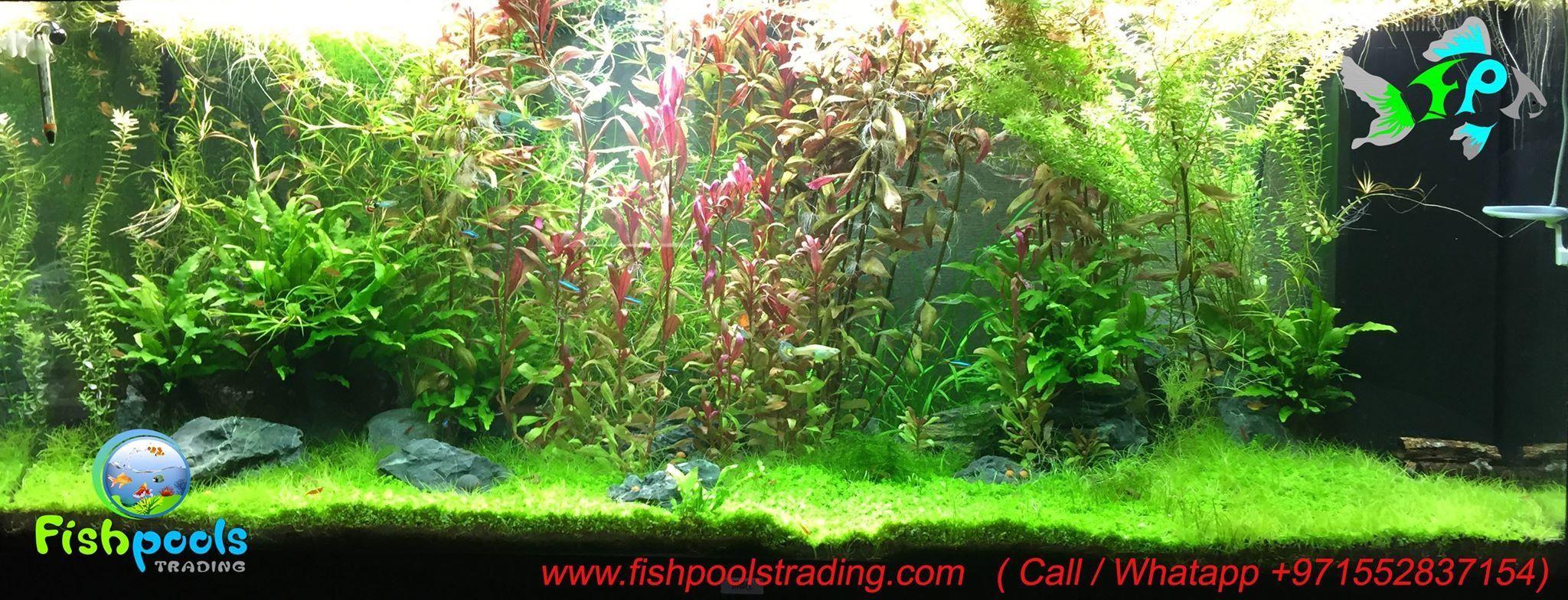 Pin by Fish Pools Trading LLC on Aquascaping UAE
