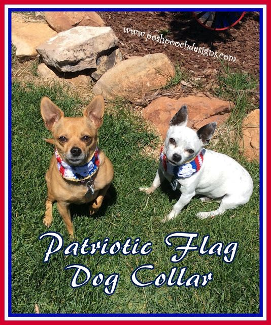 Posh Pooch Designs Dog Clothes Slip On Patriotic Dog Collar Crochet