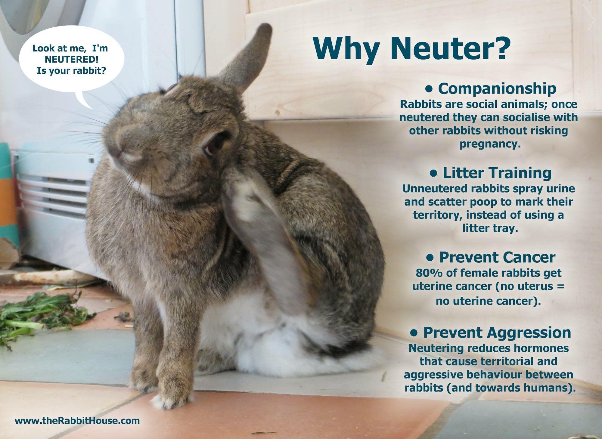 Neuter rabbit