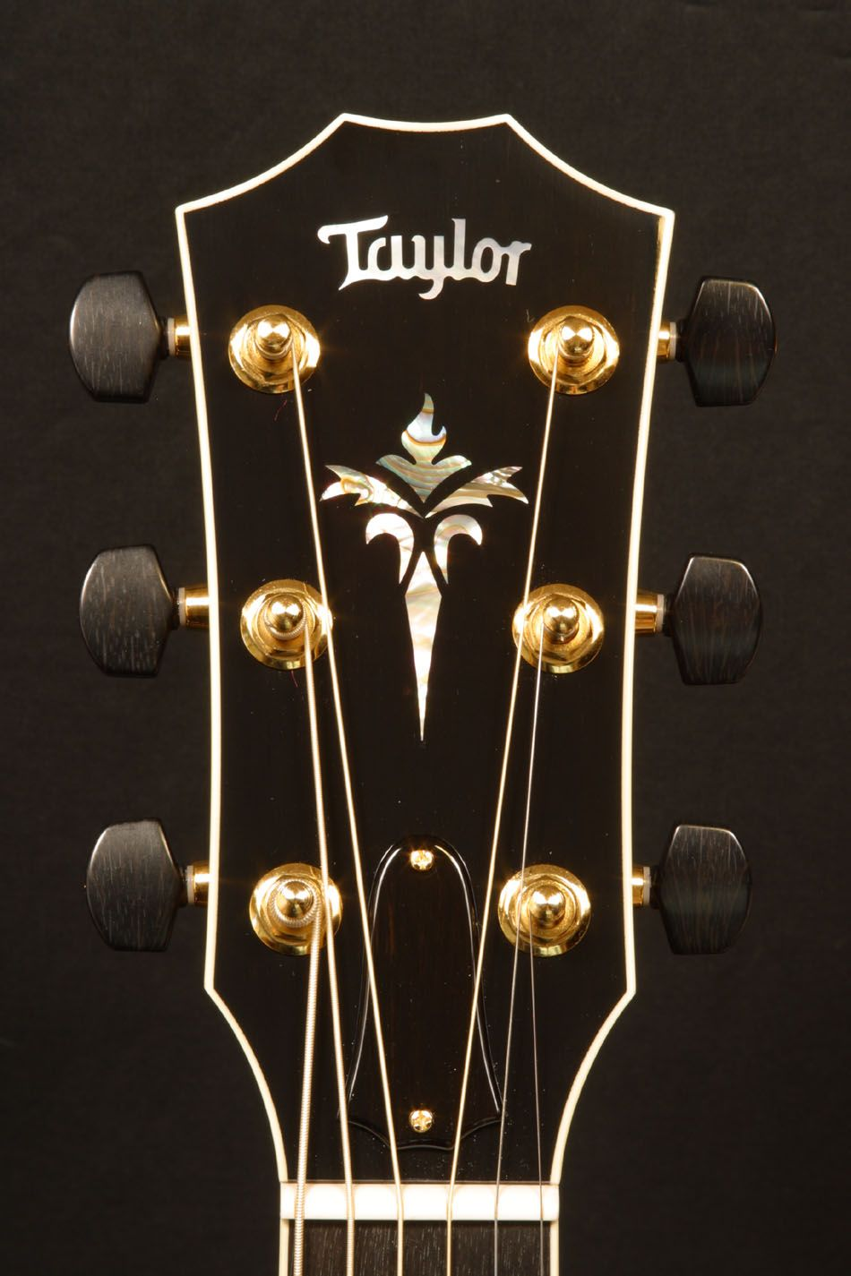 Taylor Headstock Google Search Beautiful Guitars Taylor Guitars Luthiery