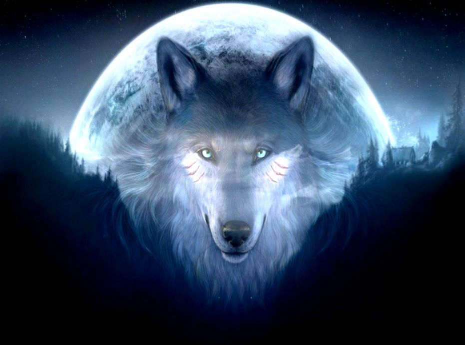 3D Wolf Wallpaper Hd