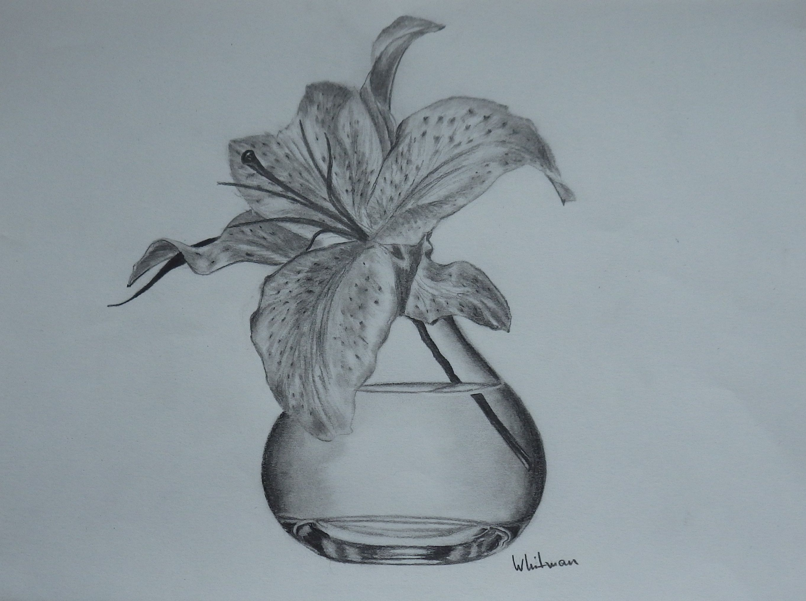 90 Lilly in a vase, still life sketch. Original art