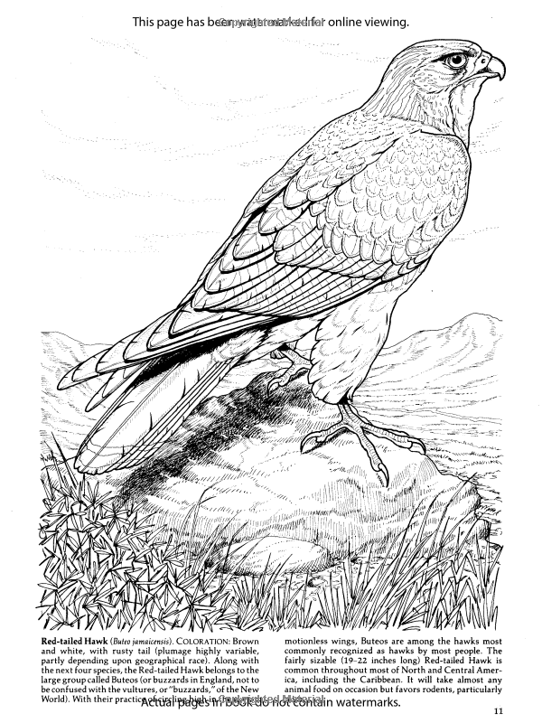 Birds of Prey Coloring Book (Dover Nature Coloring Book