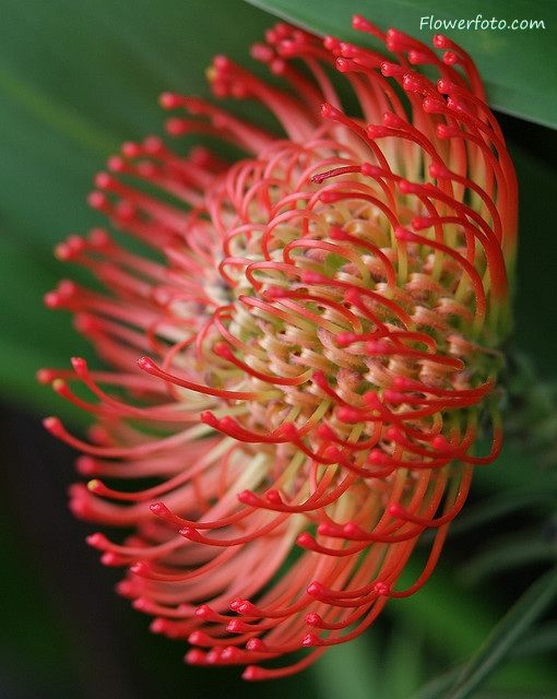 Exotic Flower Picture Of Tropical Pot Flowers