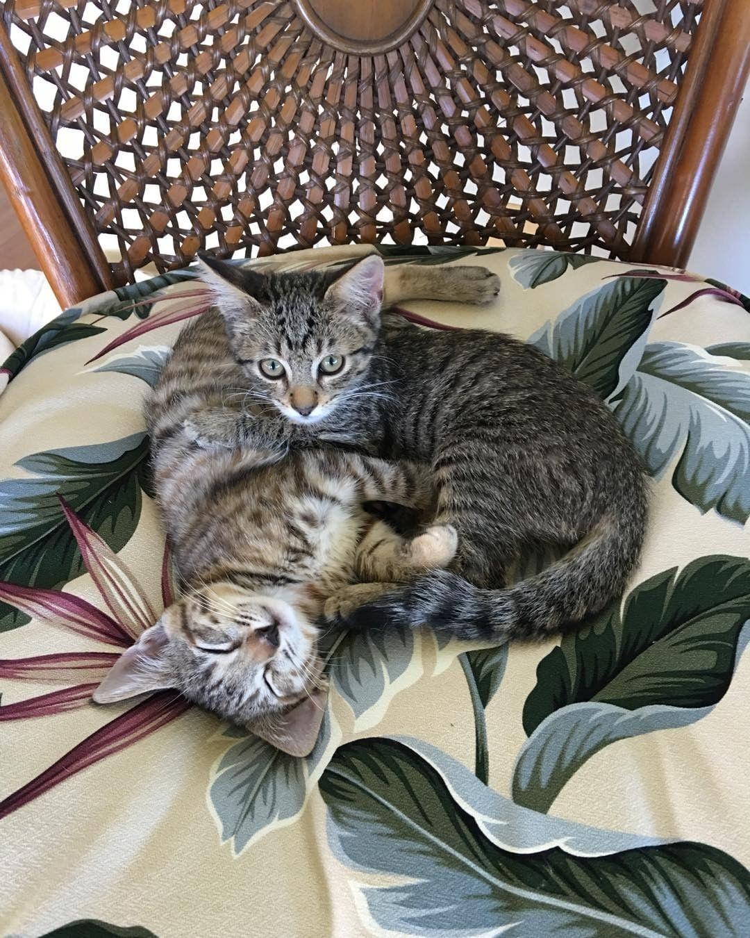 Our new kittens mauihumanesociety Kathleen Alexander