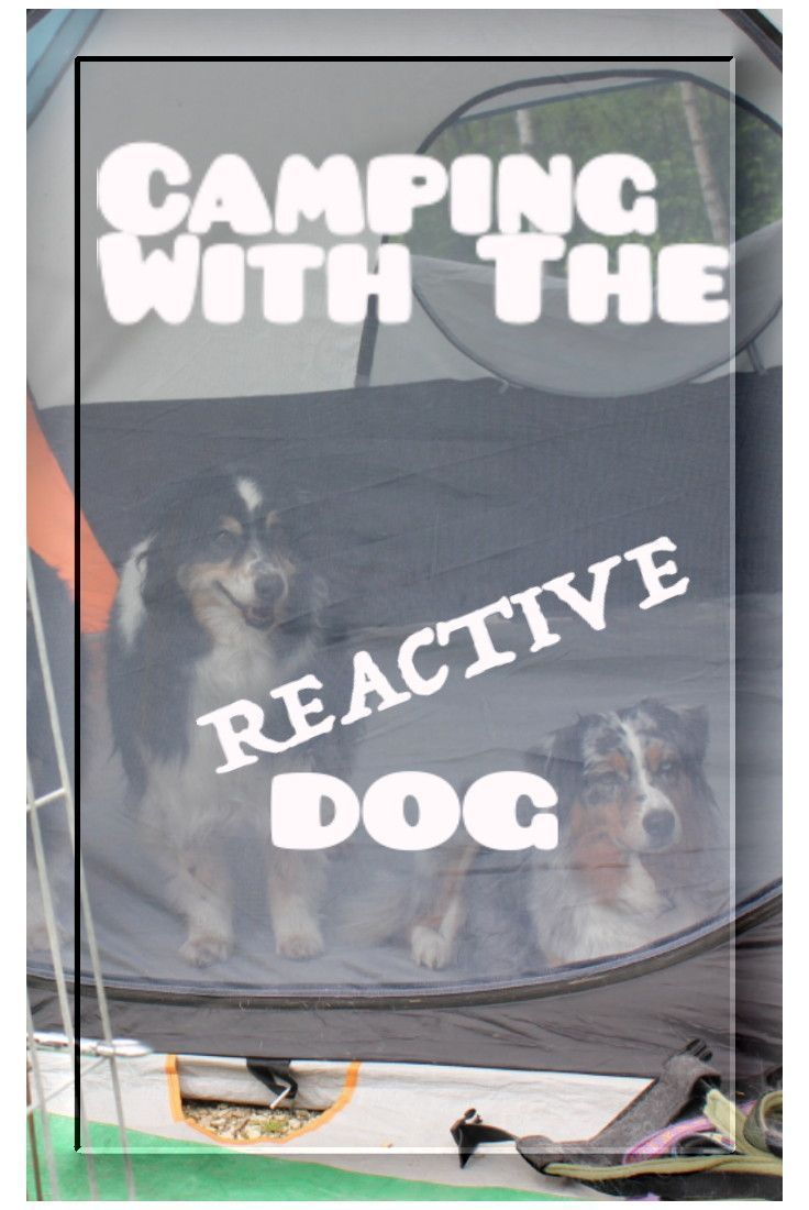Five Tips For Camping With A Barky/Reactive Dog | Dog ...