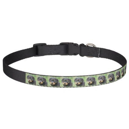 #Doggy McDogface Rottweiler Puppy Pet Collar - #rottweiler #puppy #rottweilers #dog #dogs #pet #pets #cute