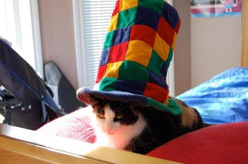 Cat in the Hat is not amused -_-