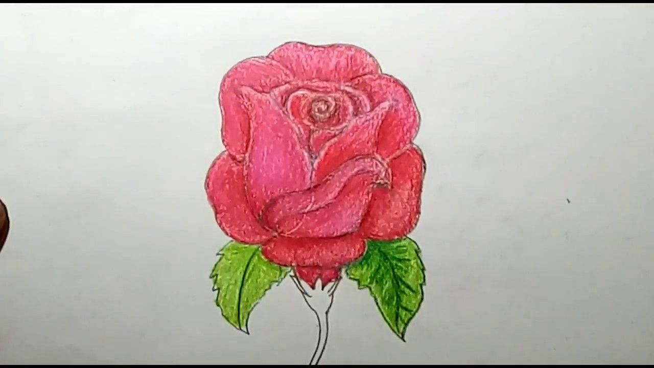 12 Rose Drawing Anime In 2020 Rose Drawing Realistic Rose Drawing Drawings
