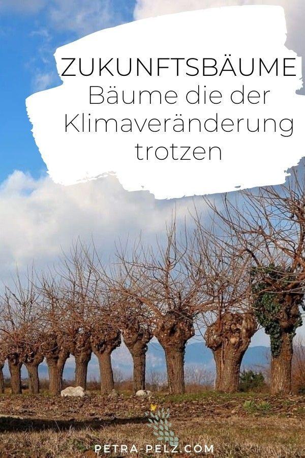 Zukunftsbäume: Welche Bäume das sind #kleinegärten