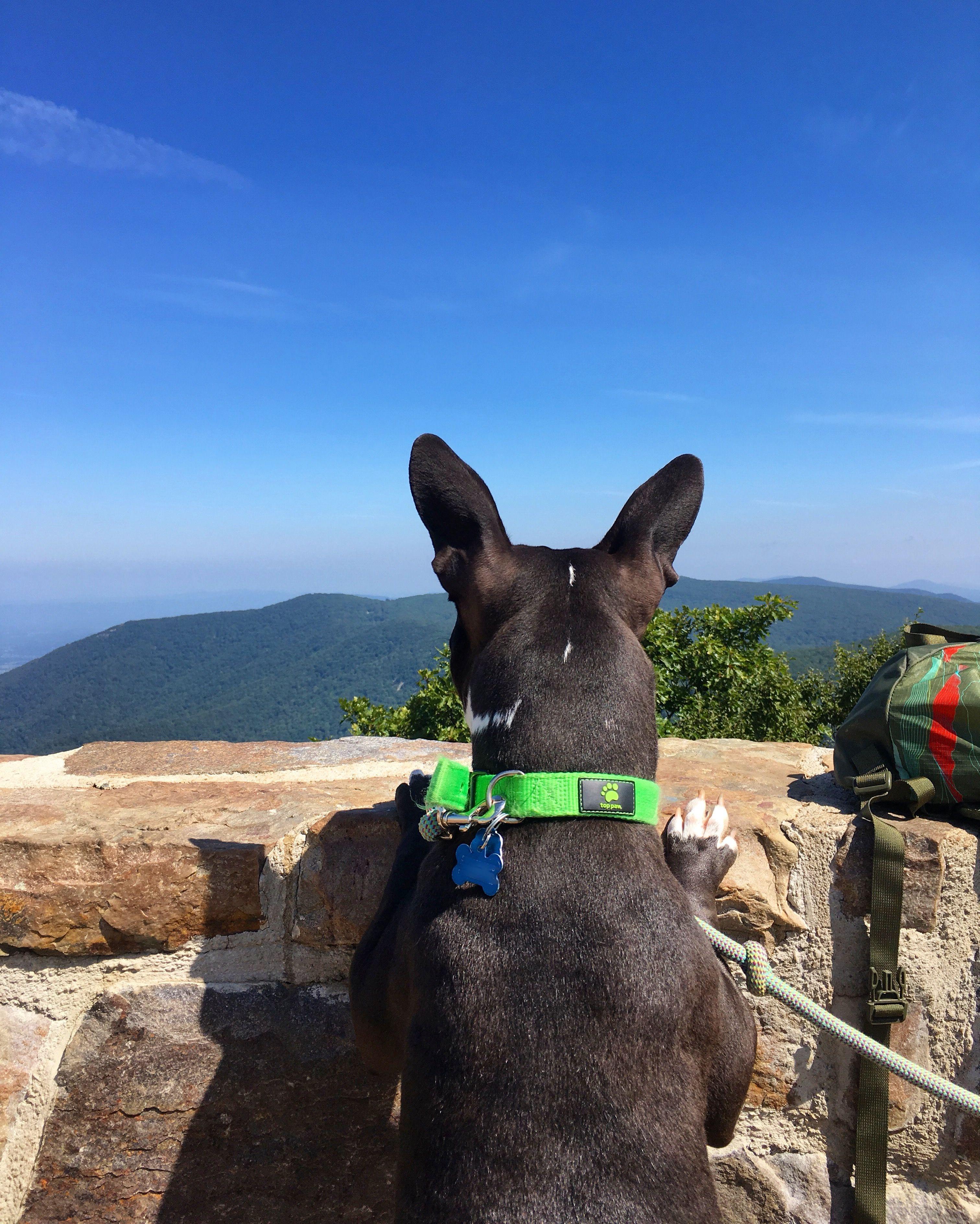 Hawksbill Mountain Shenandoah National Park Appalachian Trail