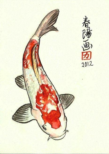 Koi dibujo buscar con google for Koi japones