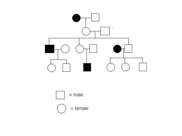 Pedigree Worksheet Interpreting A Human Pedigree
