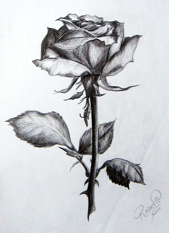 Resultado De Imagen Para Dibujos De Rosas A Lapiz Dibujo Sombreado