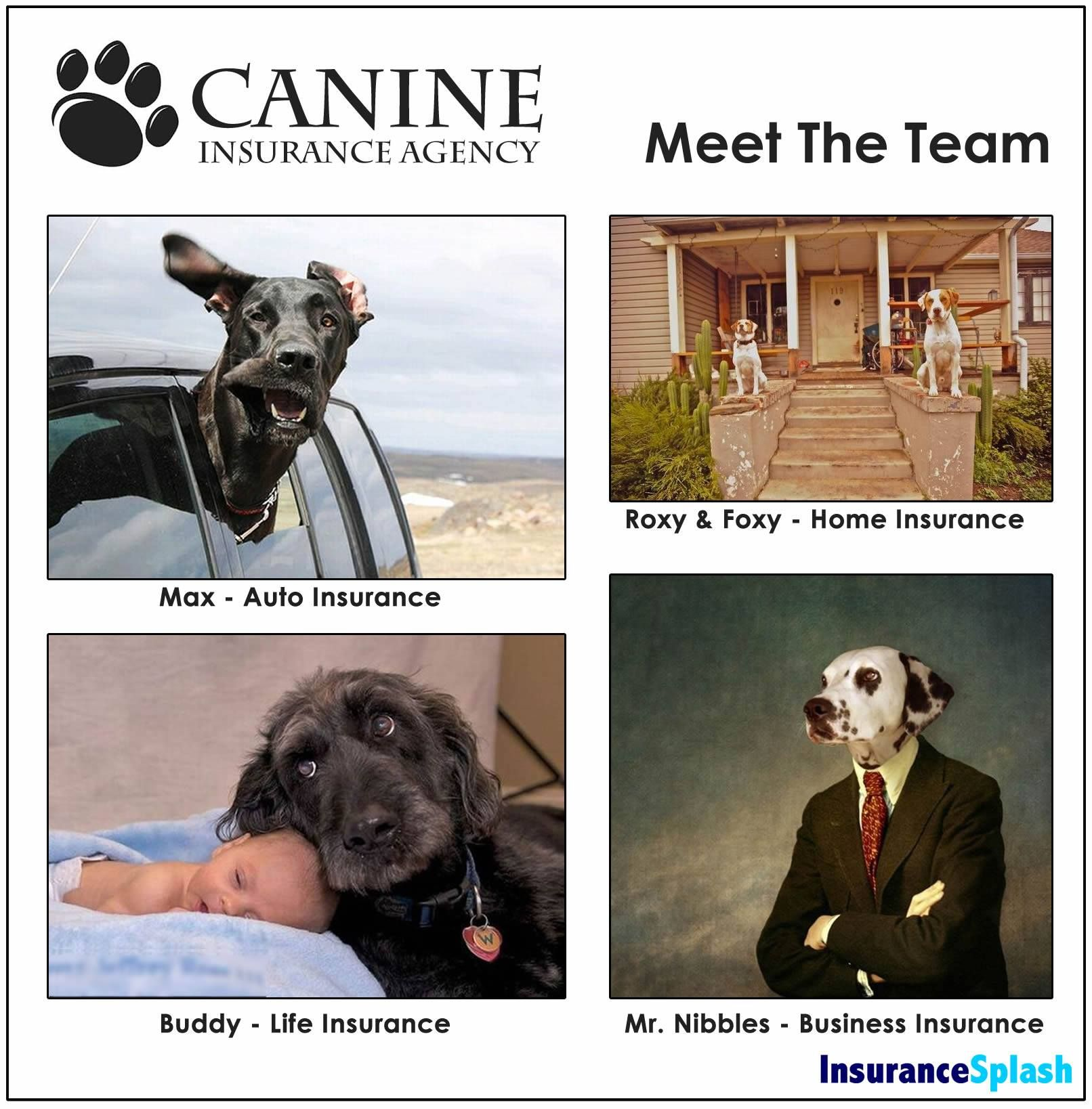 I D Buy From These Guys Dog Insurance Personal Insurance