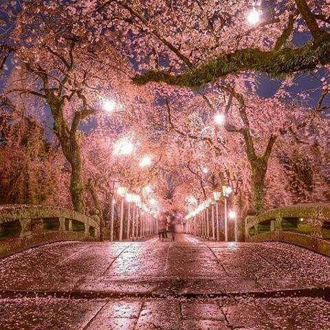 Cherry Blossoms In Japan Cherry Blossom Japan Japanese Garden Best Summer Holiday Destinations