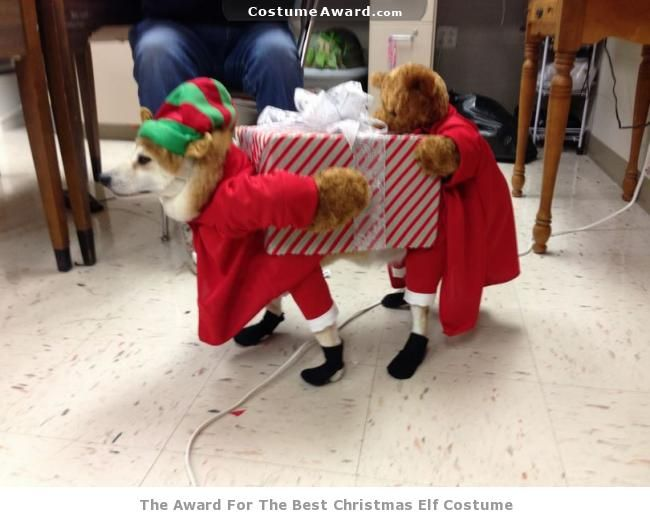 CostumeAward.com - The Costume Awards. Funny Christmas elf costume for dogs & CostumeAward.com - The Costume Awards. Funny Christmas elf costume ...