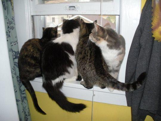 Cat Overload