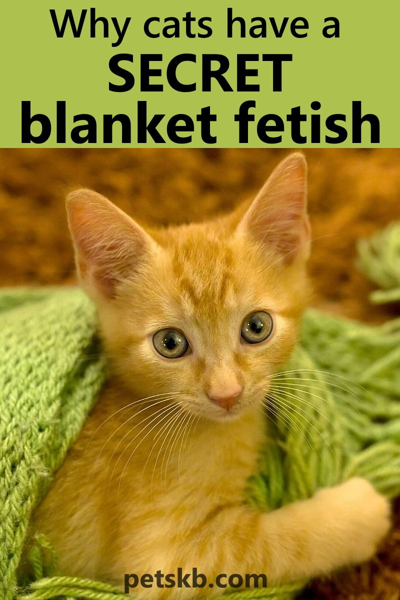 Do Cats Like Blankets These 21 Pictures Are A Clue The Pets Kb In 2020 Cats Dog Care Pets