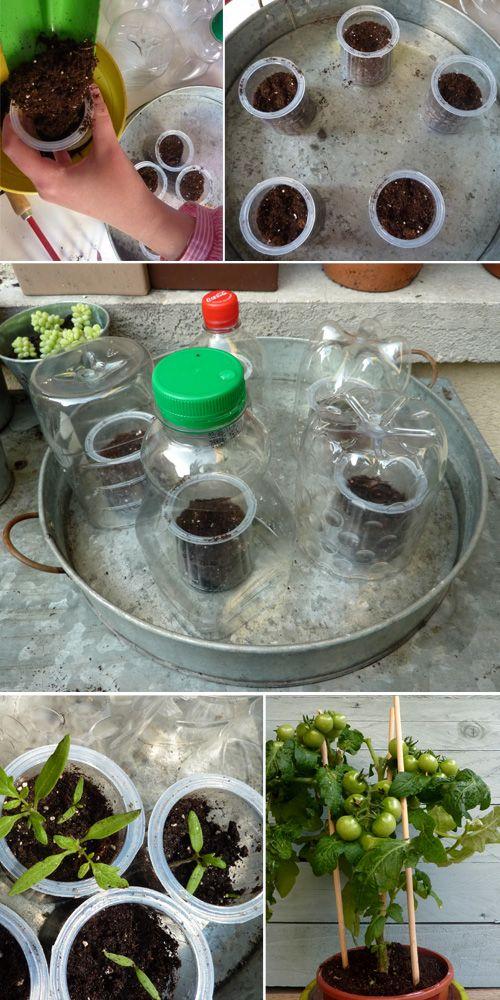 Une activité facile pour les enfants, planter des tomates