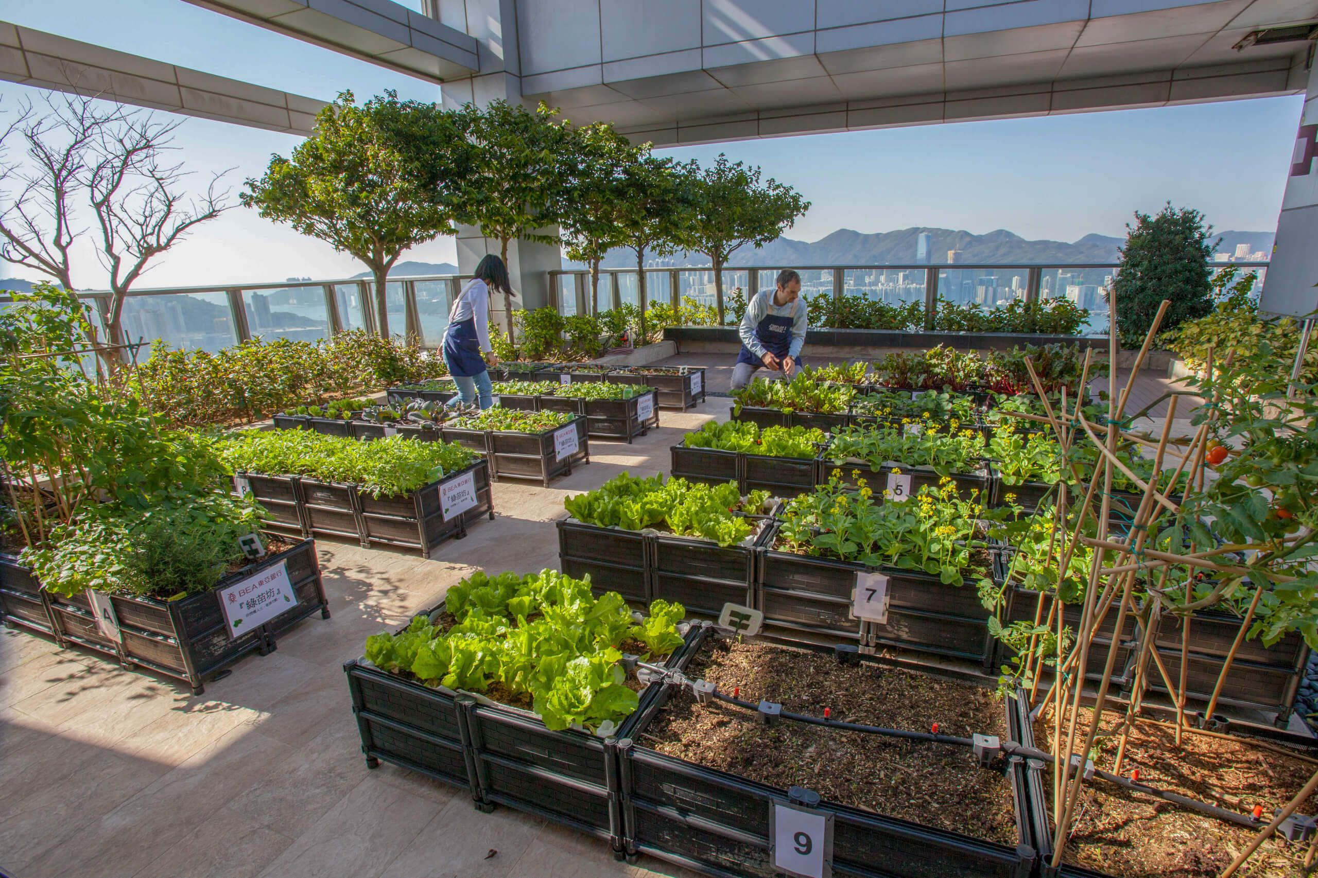 Urban rooftop farming in Hong Kong with city skyline