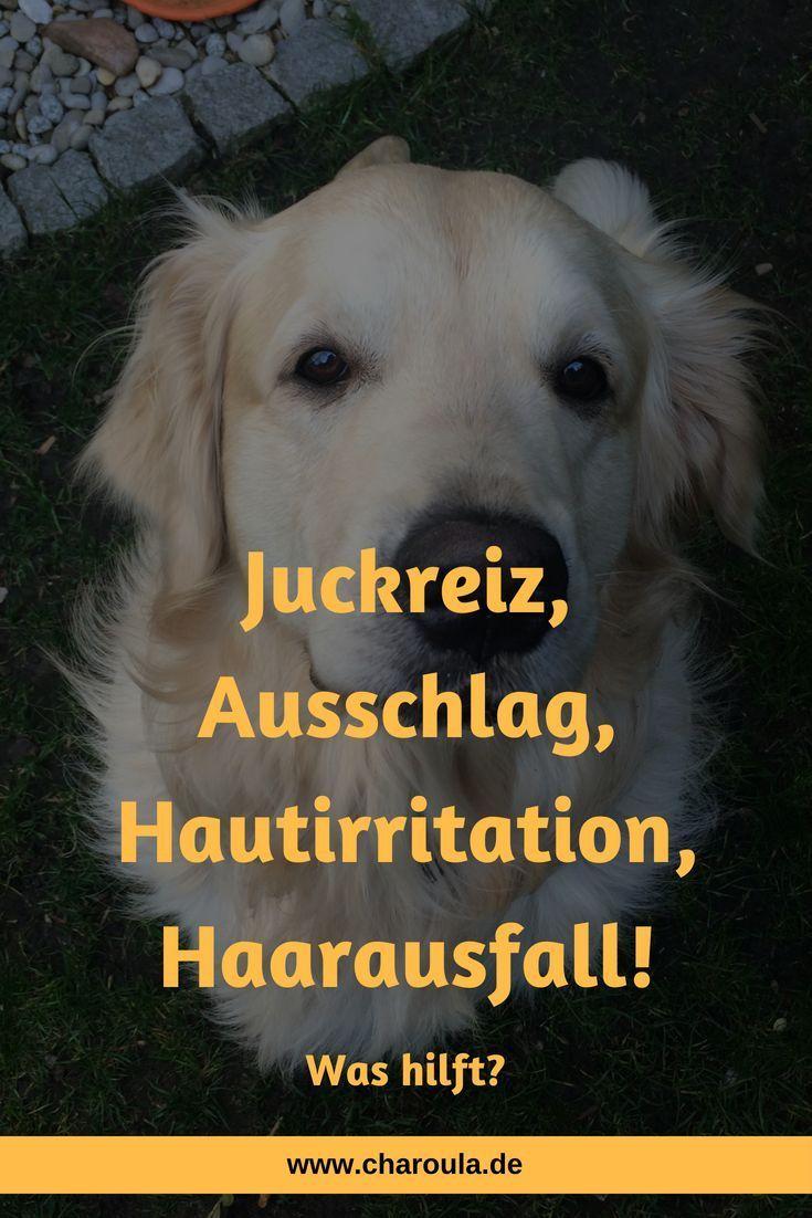 Was hilft gegen Juckreiz, Ausschlag, Hautirritation und Haarausfall beim Hund?