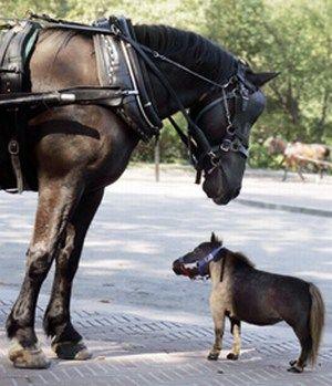 Einstein Plus Petit Cheval Du Monde Ces Animaux Incroyables Photos Bebe Animaux Animales Photo Animaux