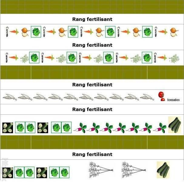 5 Exemples De Plans De Potager Et De Contenus De Potager Potager Plan Potager Jardin Potager