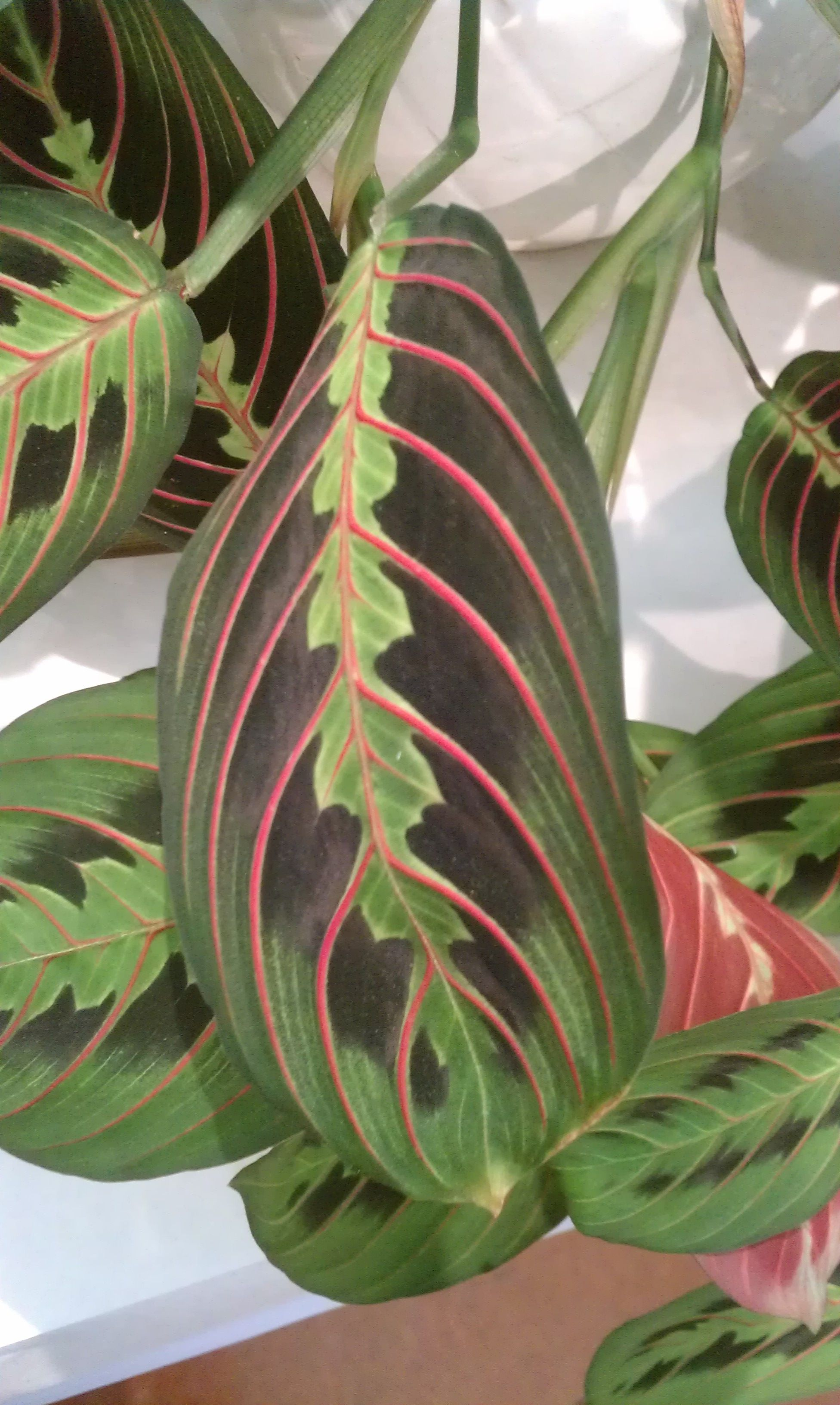 Houseplants Folds, As If In Prayer, At Night
