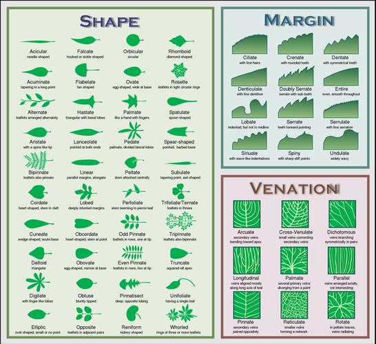 Plant Morphology Botany Science Leaf Identification Chart Leaf Identification Plant Identification