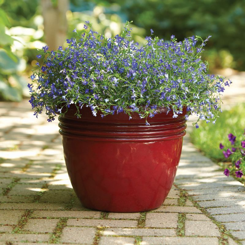 Homes And Gardens Bombay Decorative Outdoor Planter