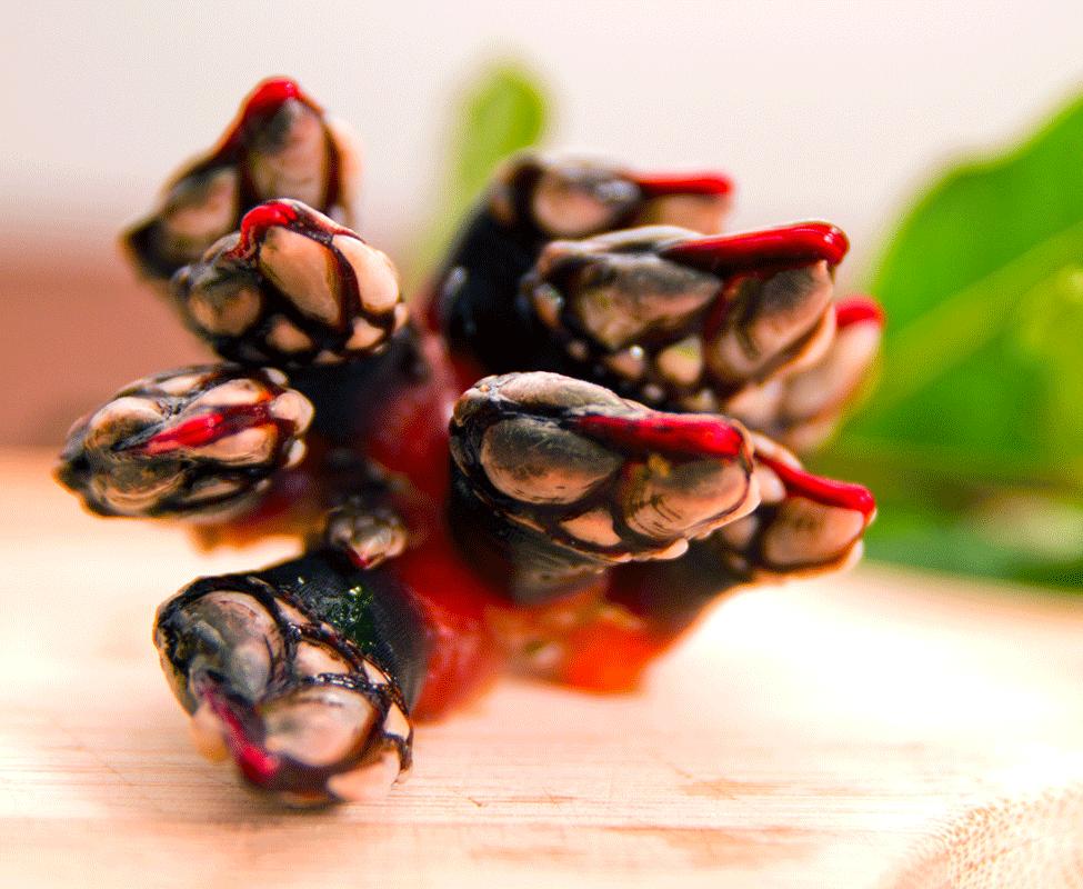 Percebe Mariscos Platos Tradicionales Coco