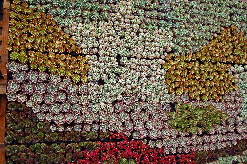 San Francisco Garden Show Succulent Gardens Succulent Wall
