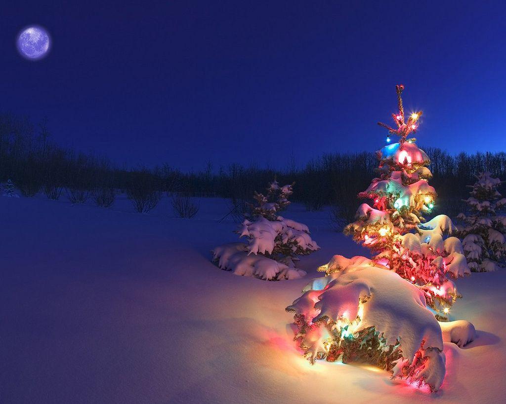 Snow Christmas Wallpaper Hd Beautiful Christmas Trees Christmas Desktop