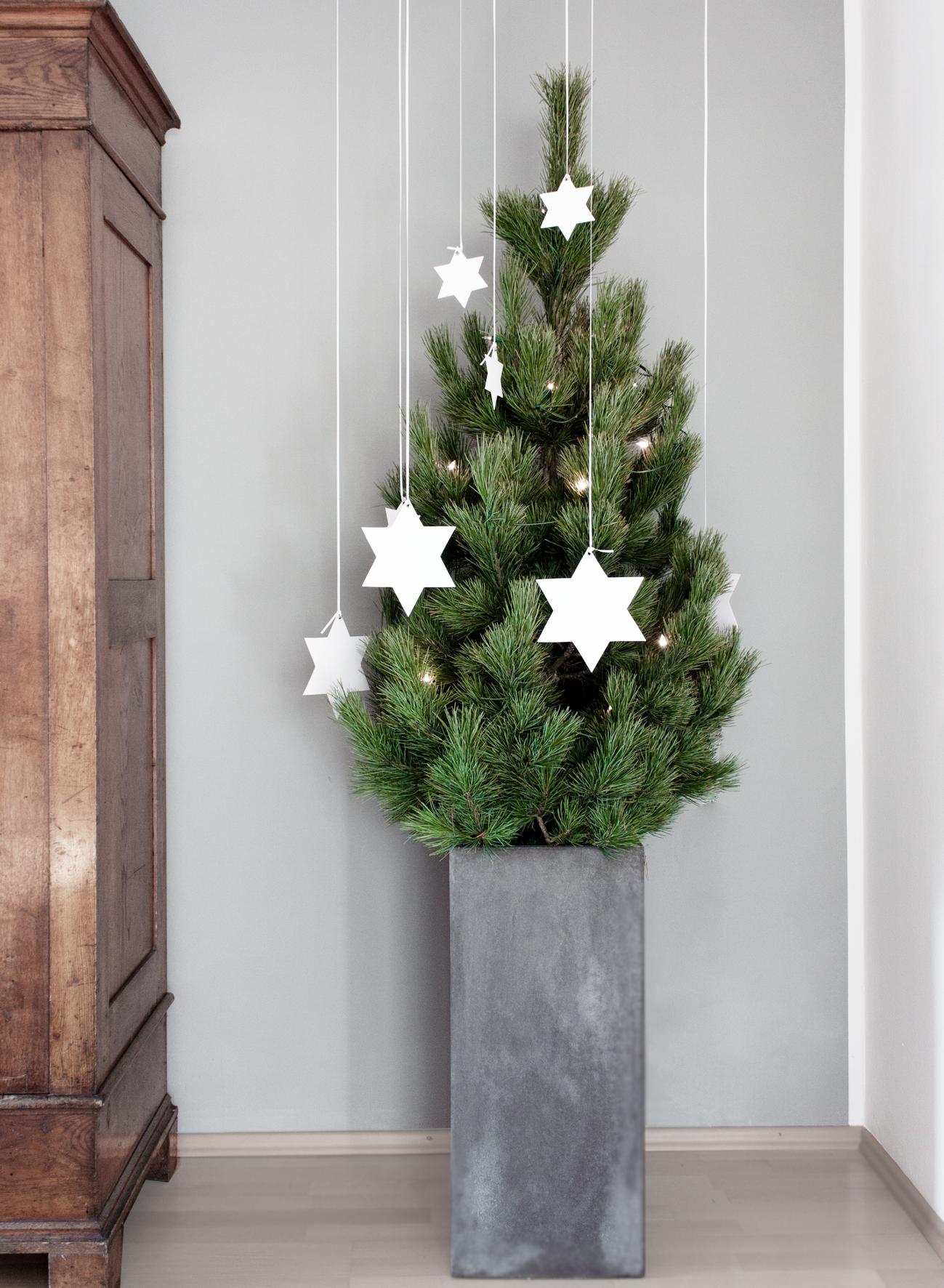 weihnachtsbaum kiefer 1 christmas pinterest. Black Bedroom Furniture Sets. Home Design Ideas